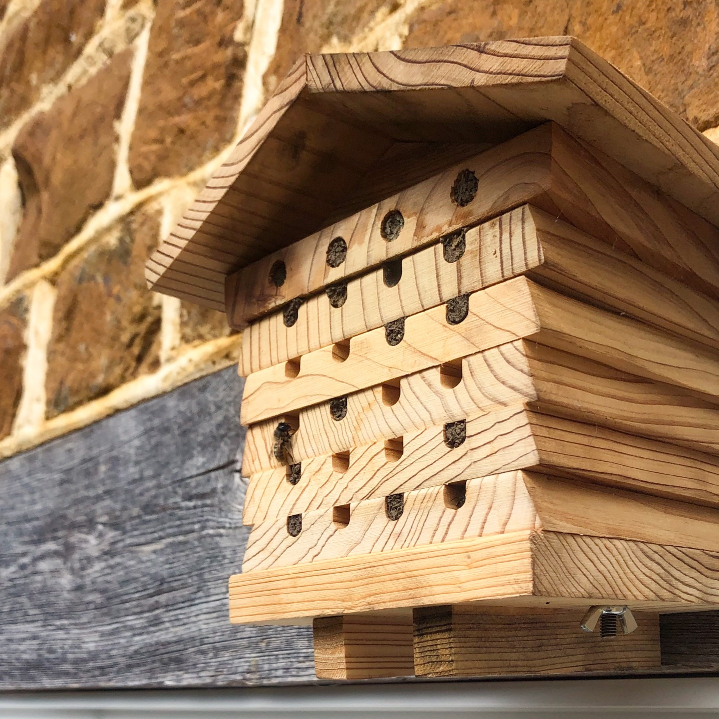 An occupied bee hotel